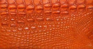 Couro Textured do crocodilo Imagens de Stock Royalty Free