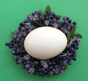 couronne鸡蛋 图库摄影
