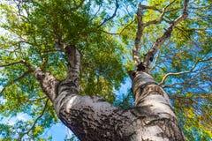 Couronne d'arbre Photo stock