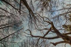Couronne d'arbre Photographie stock