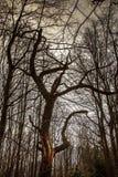 Couronne d'arbre Photographie stock libre de droits