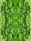 Couronne d'arbre avec les feuilles vertes Photo libre de droits