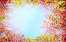 Couronne d'arbre d'automne avec les feuilles colorées sur le fond de ciel bleu avec le soleil Photographie stock libre de droits