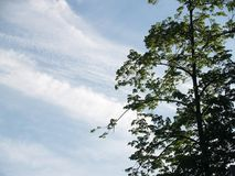 Couronne d'arbre de ressort Images libres de droits
