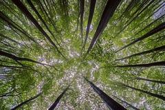 Couronne d'arbre de ressort photo libre de droits