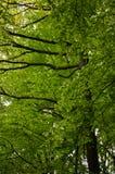 Couronne d'arbre de ressort Photographie stock libre de droits