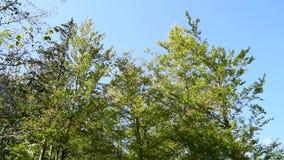 Couronne d'arbre en automne clips vidéos