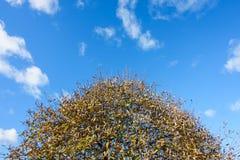 Couronne d'un arbre en automne Image libre de droits