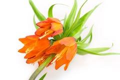 Couronne de fleurs Photos libres de droits