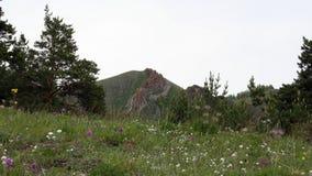 Couronne de rouge de montagne Photo libre de droits