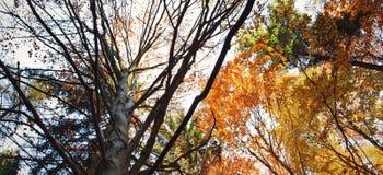 Couronne des arbres en automne Photographie stock