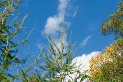 couronne des feuilles contre le ciel Photos libres de droits
