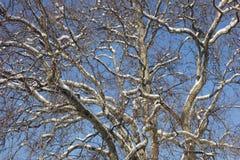 Couronne vide d'arbre sur le ciel bleu en hiver Photographie stock