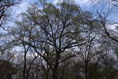 Couronnes d'arbre Image stock