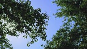 Couronnes d'arbre dans le ciel bleu banque de vidéos