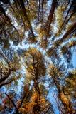 Couronnes d'arbres grands dans le ciel Photos stock