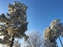 Couronnes de neige Image libre de droits