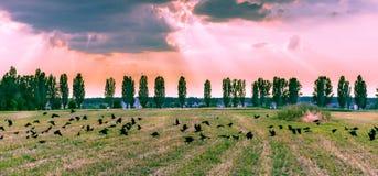 Couronnes sur la vue panoramique de campagne de champ de coucher du soleil Images stock