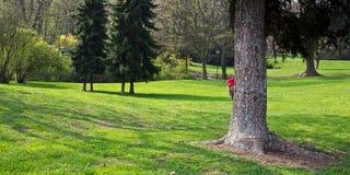 Couros crus da menina atrás de uma árvore Foto de Stock