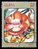 Couroupita guianensis, serie av bilder Royaltyfria Bilder