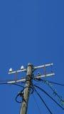 Courrier électrique Photos libres de droits