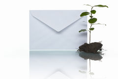 Courrier et plante verte Photo stock