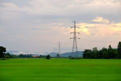 Courrier ou tour à haute tension de haute tension avec le gisement vert de riz Photo libre de droits