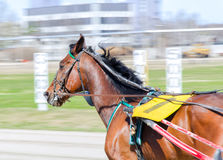 Course d'attelages. Images stock