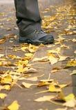 Course d'automne images libres de droits