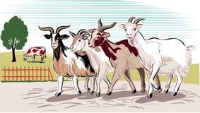 Course de chèvres à retourner illustration de vecteur