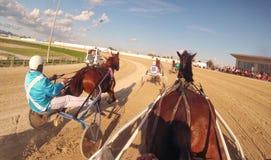 Course de chars de harnais de cheval 014 images stock