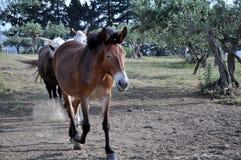 Course de cheval Images stock
