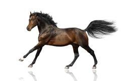 Course de cheval d'isolement photo libre de droits