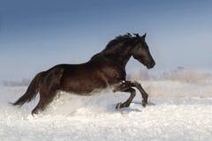 Course de cheval dans le jour de neige d'hiver photo stock