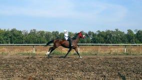 Course de cheval dans le mouvement lent banque de vidéos