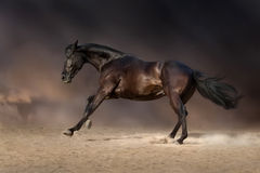 Course de cheval de baie Photos libres de droits