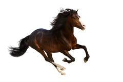 Course de cheval de baie image libre de droits