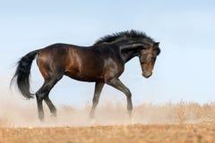 Course de cheval de baie photos stock