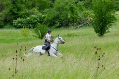 Course de cheval de pays croisé Photo stock