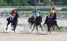 Course de chevaux. Photo libre de droits