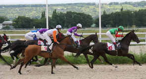 Course de chevaux. Photos libres de droits
