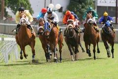 Course de chevaux Photo libre de droits