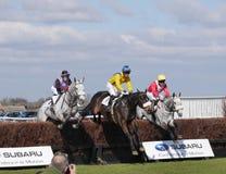 Course de chevaux amateur sautant par-dessus des barrières Photos libres de droits