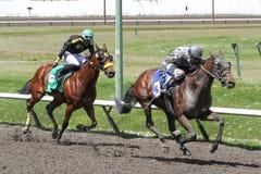 Course de chevaux au PNE image libre de droits