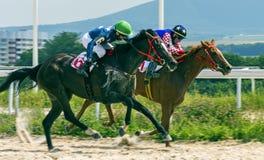 Course de chevaux pour le prix des chênes dans Pyatigorsk Photographie stock