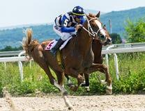 Course de chevaux pour le prix des chênes dans Pyatigorsk Photos stock
