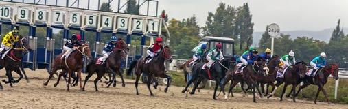 Course de chevaux pour le prix du Bolshoi Letni Images libres de droits