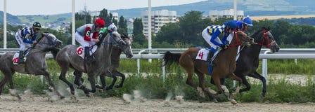 Course de chevaux pour le prix du Bolshoi Letni dans Pyatigorsk Photo stock