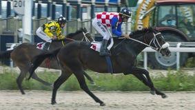 Course de chevaux pour le prix du Letni dans Pyatigorsk Images libres de droits