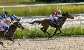 Course de chevaux pour le prix du Letni dans Pyatigorsk Image stock